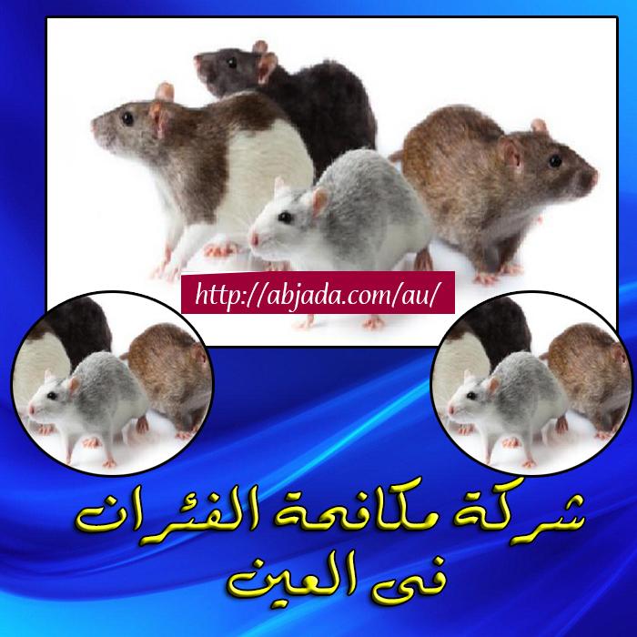 شركات مكافحة الفئران بالعين