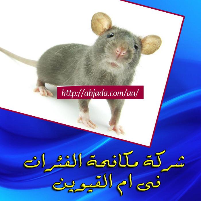 مكافحة الفئران ام القيوين - ابادة القوارض بأم القيوين
