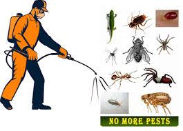 شركة مكافحة حشرات الشارقة